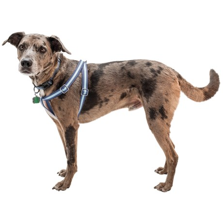 Harry Barker Eton Step-In Dog Harness - Recycled PET