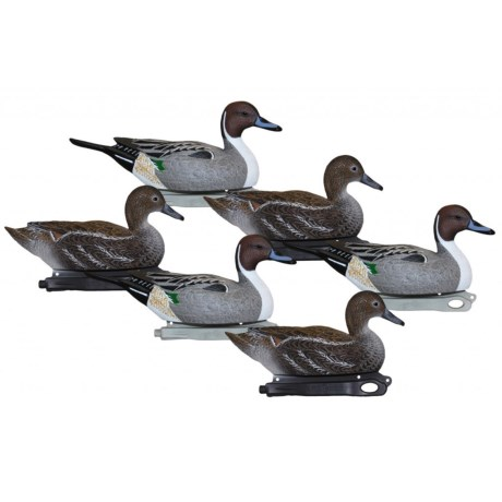 Hardcore Floating Standard Pintail Decoys - 6-Piece