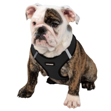Best Pet Step-In Dog Harness