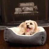 "Woolrich Herringbone Cuddler Dog Bed - 20x18"""