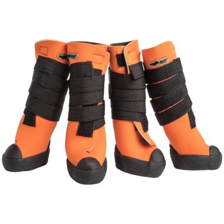 Avery Hi-Top Dog Boots