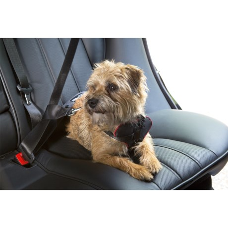 Spot On Dog Car Harness