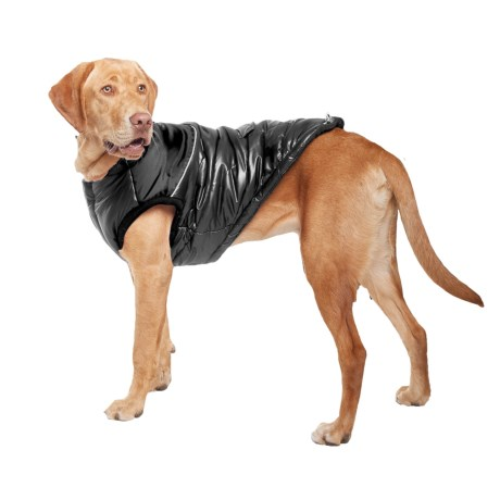 Silver Paw Stylist Winter Dog Jacket - Insulated