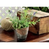 Tag Potted Mixed Herbs