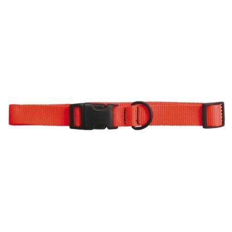 "Bison Designs 1"" Nylon Dog Collar"