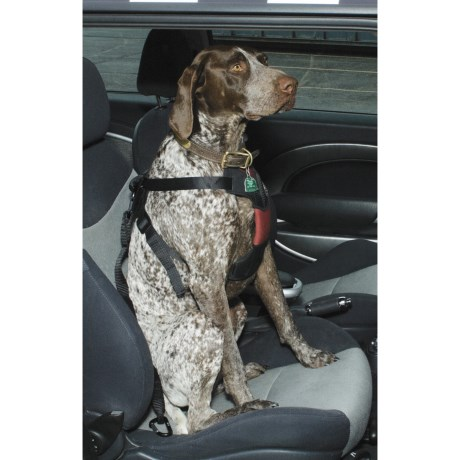 ASPCA Safety Travel Dog Harness - Large