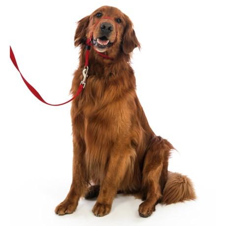 Premier Pet Eco Gentle Leader - Large, 6' Leash Included