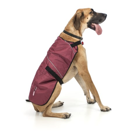 Ezydog Field Coat - 2XL