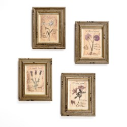 Two's Company Botanical Prints by Officina Naturalis - Set of 4