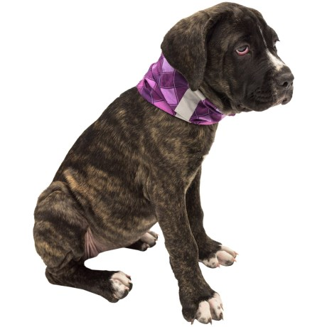 Buff Dog Reflective Buff - Active Odor Control