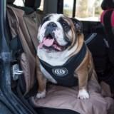 AKC 2-in-1 Seat Belt Harness