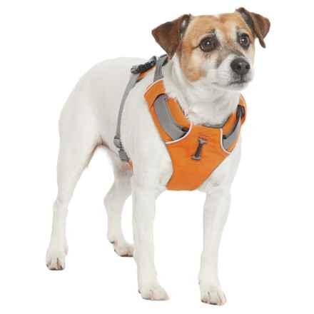 Ruffwear Front Range Dog Harness in Campfire Orange - Closeouts