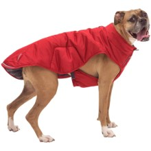 Ruffwear Quinzee Insulated Dog Jacket in Red Rock - Closeouts
