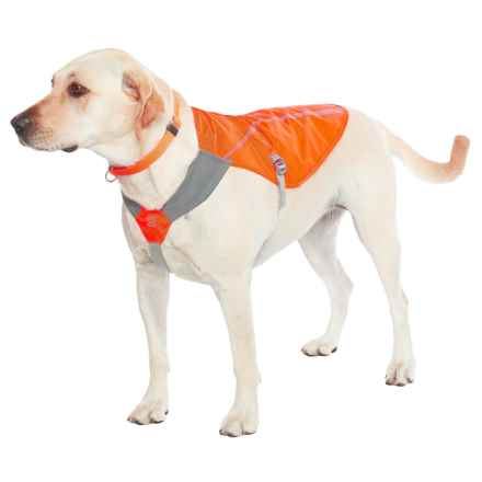 Ruffwear Track Dog Jacket in Blaze Orange - Closeouts