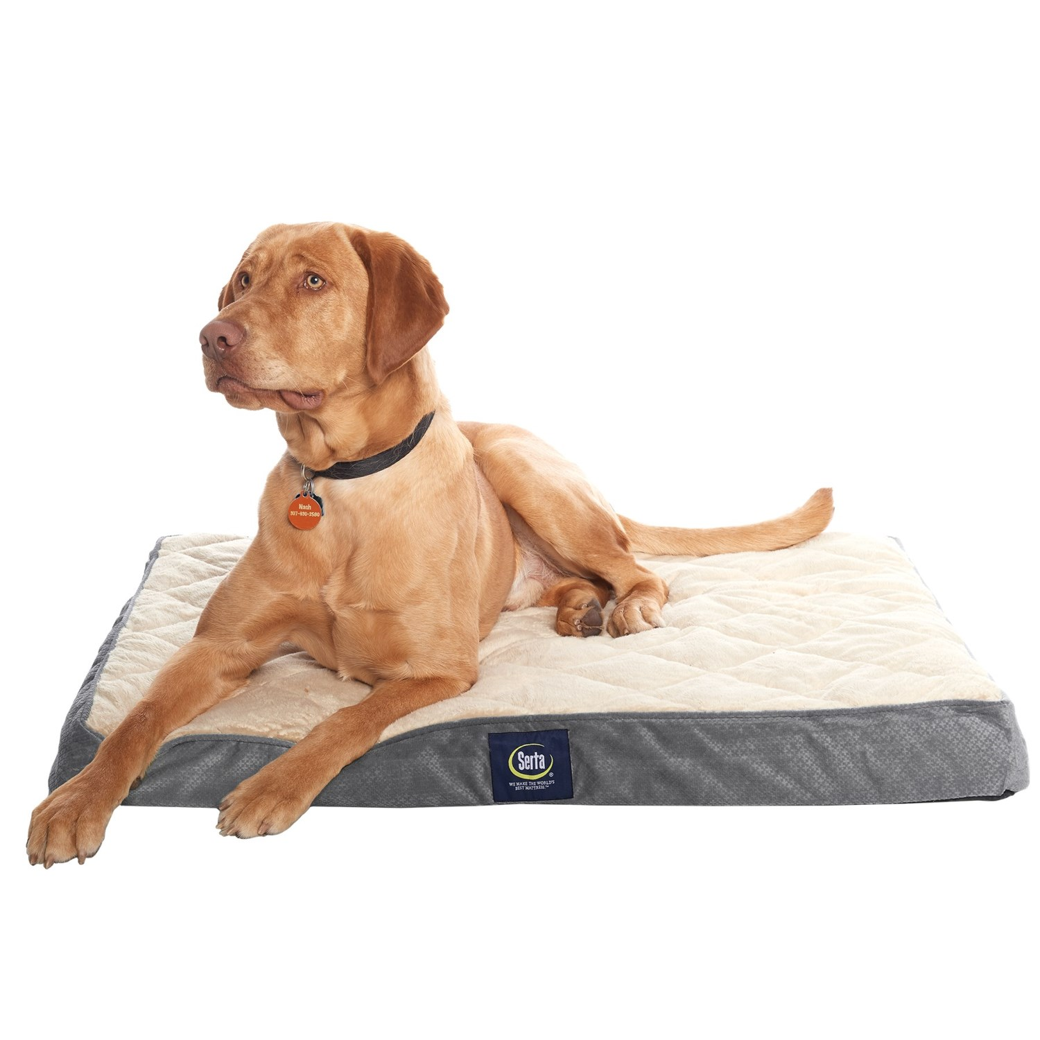 of full or night territory s dog pet serta for beds sleep hour a best bed more
