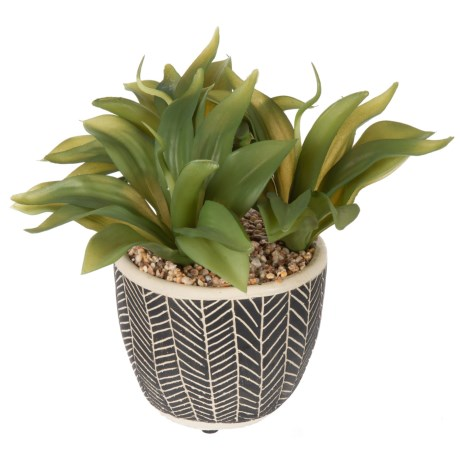 "Siena Floral Accents Aloe in Cement Pot - 8x6"" in Black"