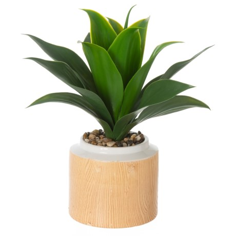 """Siena Floral Accents Aloe in Wooden Pot - 14"""" in See Photo"""