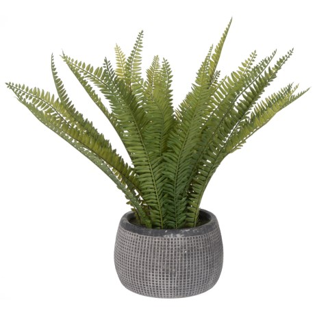 """Siena Floral Accents Fern in Cement Pot - 20x8.5"""" in Gray"""