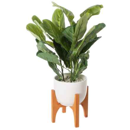 """Siena Floral Accents Fiddle Plant in Ceramic Pot with Wooden Stand - 27"""" in White - Closeouts"""