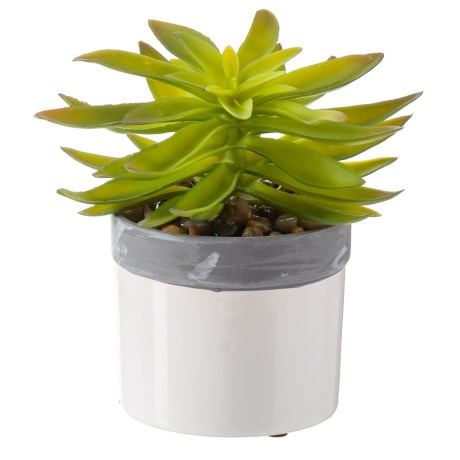 "Siena Floral Accents Succulent in Cement Pot - 6.5"" in Gray"