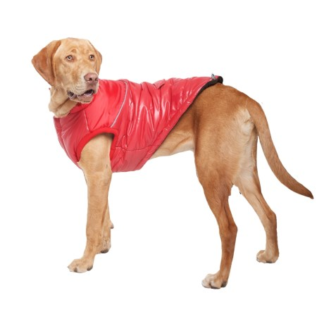 Silver Paw Stylist Winter Dog Jacket - Insulated in Red