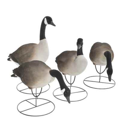 Tanglefree Greater Canada Goose Fully Flocked Full Body Combo - 4-Pack in See Photo - Closeouts