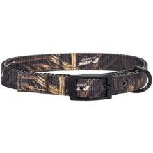 """Team Realtree 3/4"""" Adjustable Dog Collar - 18"""" in Max4 - Closeouts"""