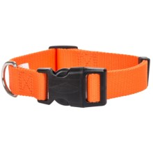 Team Realtree Blaze Quick-Snap Dog Collar in Blaze Orange - Closeouts