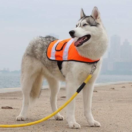 ZippyPaws LED Safety Vest