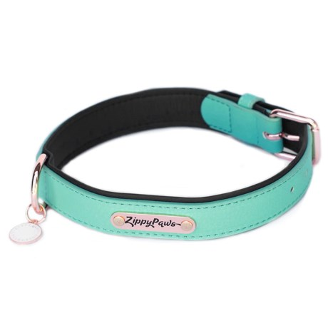 Zippypaws Vivid Collection Dog Collar - Leather in Teal